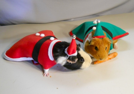 Reindeer Carrots for Guinea Pigs
