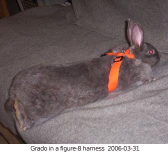 rabbit harness  eBay