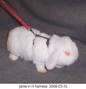 Rabbit Agility - About Harnesses